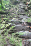 Indigenous stone stairs to Ciudad Perdida archeological site. Stone stairs built by the Tayrona indigenous anmericans around 800AD. They lead to Ciudad Perdida ( Royalty Free Stock Images
