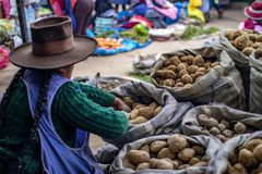Indigenous woman selling different types of potatoes royalty free stock image