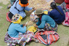 Indigenous women cutting potatoes for a local wedding ceremony Royalty Free Stock Images