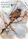 Indigo d'hiver Photographie stock libre de droits