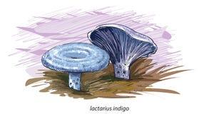 Indigo mushroom Royalty Free Stock Images