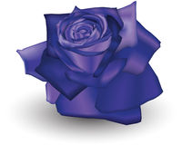 Indigo Rose. Illustration of a Indigo coloured rose Stock Photo