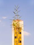 Indikator och gräs för vatten jämn överst Royaltyfri Foto