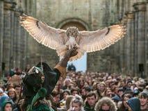 Indio Eagle Owl con el halconero Fotos de archivo