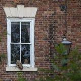 Indio Eagle-Owl Perched en una repisa de la ventana fotografía de archivo libre de regalías