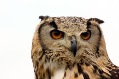 Indisch Eagle Owl Stock Foto's