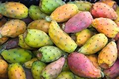 Indisch fig. Stock Foto's