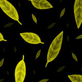 Indisch geel bladerenpatroon op zwarte Royalty-vrije Stock Fotografie