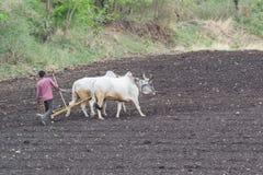 Indisch Landbouwers ploegend gebied stock afbeeldingen