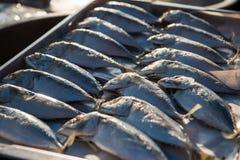 Indisch-Makrelenfische von Meeresfrüchten lizenzfreie stockbilder
