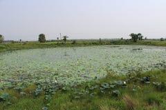 Indisch platteland royalty-vrije stock afbeeldingen