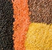 Indisch Voedsel - Linzen royalty-vrije stock afbeeldingen