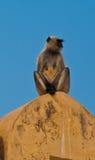 Indische Affen bei Amber Fort Lizenzfreie Stockbilder