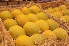 Indische Alphonso Mango's Royalty-vrije Stock Foto's