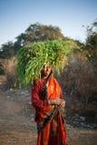Indische Dorfbewohnerfrau, die grünes Gras trägt Stockfoto