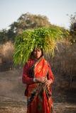 Indische Dorfbewohnerfrau, die grünes Gras trägt Stockfotografie