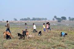 Indische Dorpsbewoners met geiten op gebied Royalty-vrije Stock Afbeeldingen