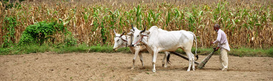 Indische dorpslandbouwer Royalty-vrije Stock Foto's