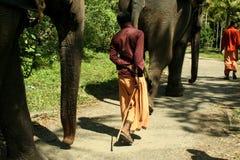 Indische Elefanten, die nach Hause gehen Lizenzfreies Stockbild