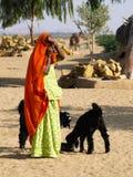 Indische Frau mit schwarzen Ziegen Stockbild