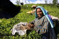 Indische Frau mit Teeblättern Stockfotografie