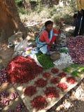 Indische Frau verkauft rote Pfeffer Stockfotos