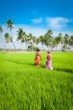 Indische Frauen, die gehen, am Reisfeld zu arbeiten FEBRUAR: Indische Frau arbeitet am Reisfeld Stockbild