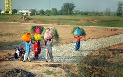 Indische Frauen, die Gras tragen Stockbilder
