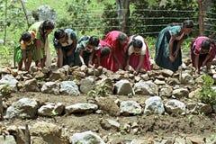 Indische Frauen, die Terrassen im Gemüsegarten errichten Lizenzfreie Stockfotografie