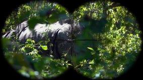 Indische Gehoornde die unicornis van de Rinocerosrinoceros door Verrekijkers wordt gezien Het letten op Dieren bij het Wildsafari stock video