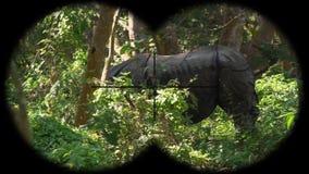 Indische Gehoornde die unicornis van de Rinocerosrinoceros door Verrekijkers wordt gezien Het letten op Dieren bij het Wildsafari stock footage
