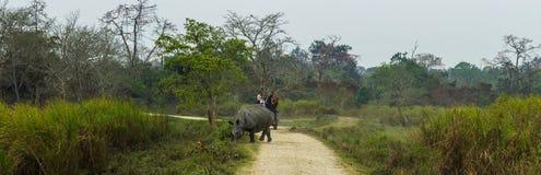 Indische Gehoornde Rinoceros stock foto's