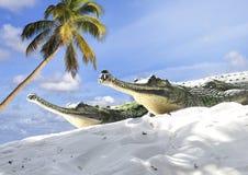 Indische Gharial Krokodile Lizenzfreie Stockfotos