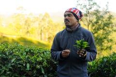 Indische gids die over theeaanplantingen tijdens excursie 20 februari 2018 Munnar, India vertellen Royalty-vrije Stock Foto