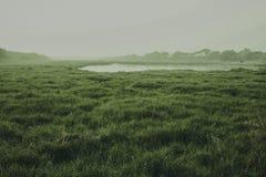 Indische Grasländer, die ehrfürchtig schauen lizenzfreies stockfoto