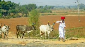 Indische herder op de manier van Jaipur tot Delhi, India stock foto's