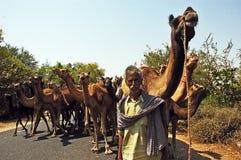 Indische Kameel Royalty-vrije Stock Foto's