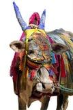 Indische koe die met kleurrijke doek, juwelen wordt verfraaid Royalty-vrije Stock Fotografie
