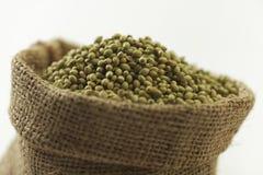 Indische kruid-koriander zaden stock afbeeldingen