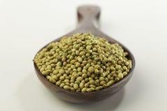 Indische kruid-koriander zaden royalty-vrije stock afbeelding