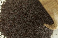 Indische kruid-mosterd stock afbeelding