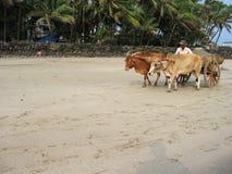 Indische kust Stock Foto's