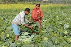 Indische Landbouw Royalty-vrije Stock Afbeeldingen