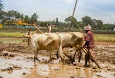 Indische Landbouwer stock foto