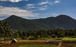 Indische Landwirtschafts-Szene mit Landwirt und Vieh stockbild