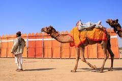 Indische mens die met kamelen in Jaisalmer, India lopen Stock Fotografie