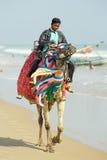 Indische mens en kameel Royalty-vrije Stock Afbeelding