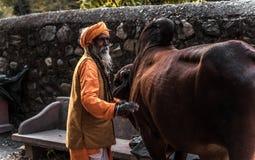 Indische monnikstribunes op de straat dichtbij de koe stock afbeelding