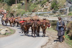 Indische moslemische Männer und Wohnwagen von Pferden in Srinagar, Kaschmir, Indien Stockfotografie
