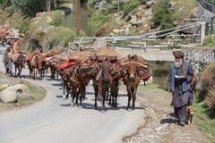 Indische moslimmensen en caravan van paarden in Srinagar, Kashmir, India Stock Fotografie